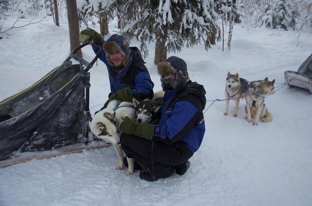 Lappland-Hundeschlitten-Abschied