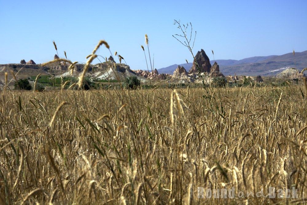 Getreidefeld mit den dahinterliegenden Bergen Kappadokiens