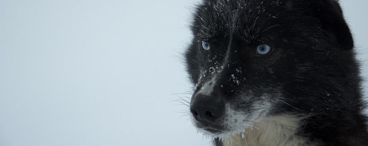Lappland-Hundeschlitten-Titelbild